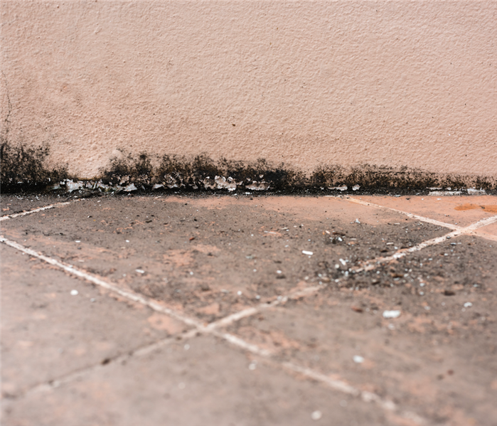 Mold Remediation What To Do When You Notice Black Mold in Your Home