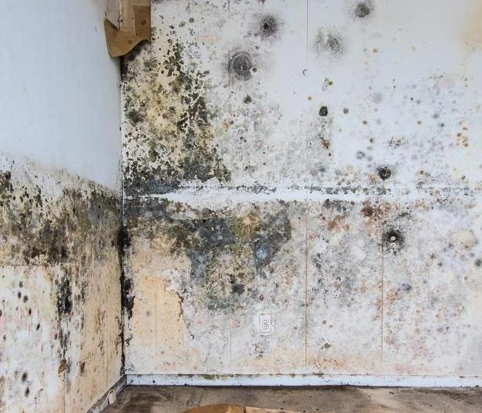 Mold Remediation How Can I Detect In My Home