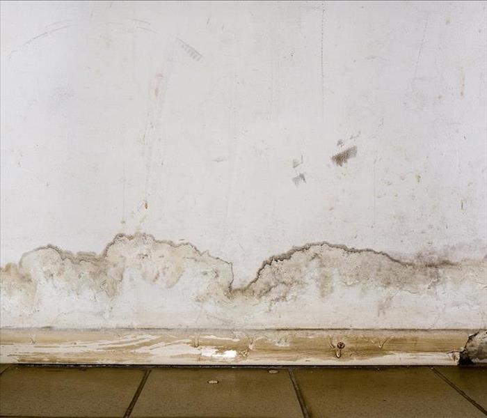 Mold damage in home